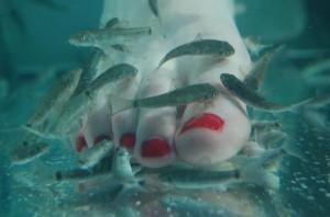 лечение с рибки